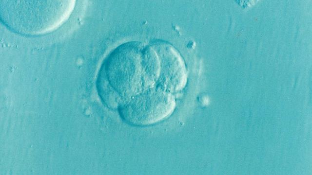 Embryo buňky